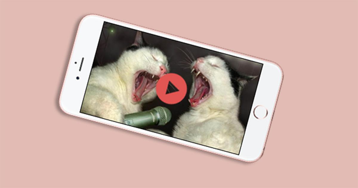 De giver dig sjove kattevideoer på nettet ...