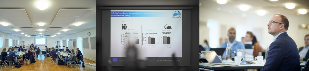 Animal models fatty liver ALD