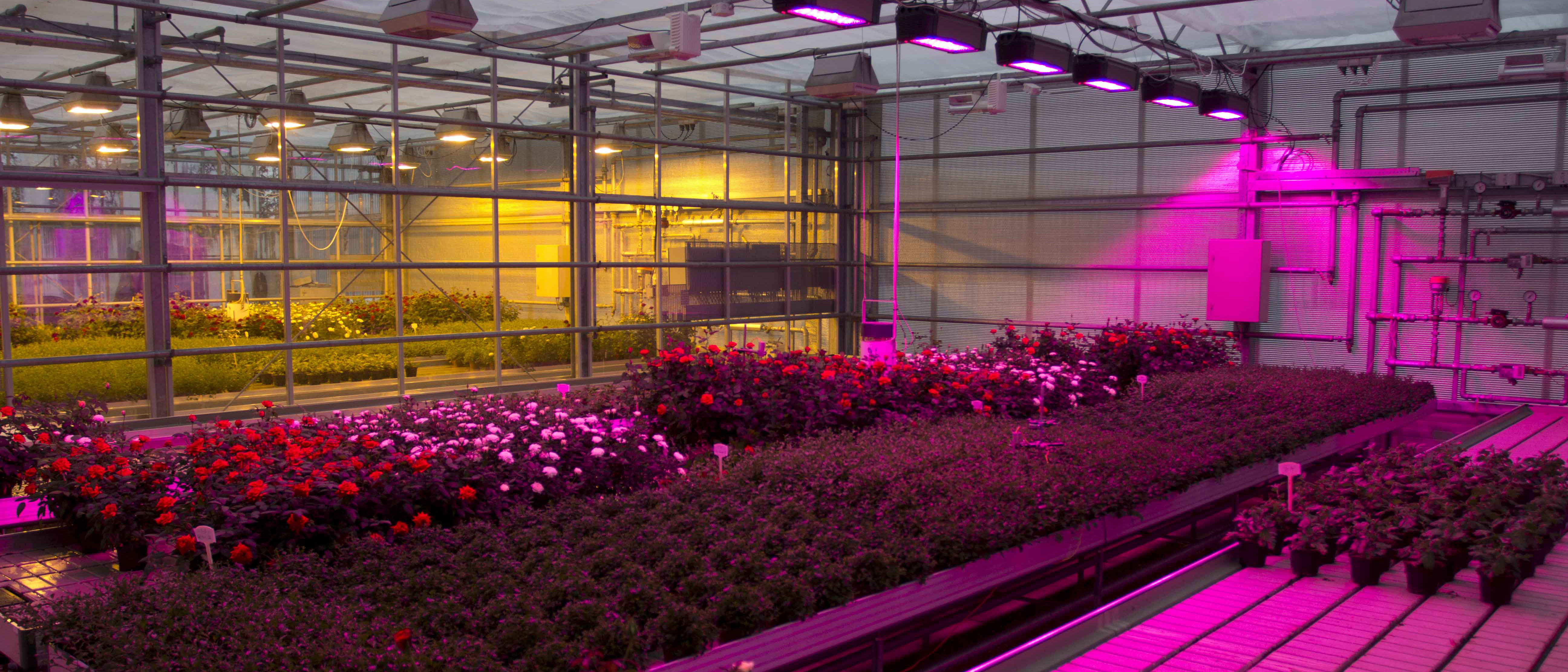 Smart Grid Ready Energy Cost Efficient Lighting System for Green House Horticulture