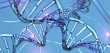 Gener har betydning for lang levetid