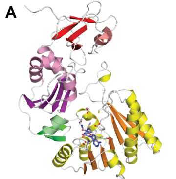 Structure of the enzyme that methylates C1942 of T. thermophilus 23S rRNA